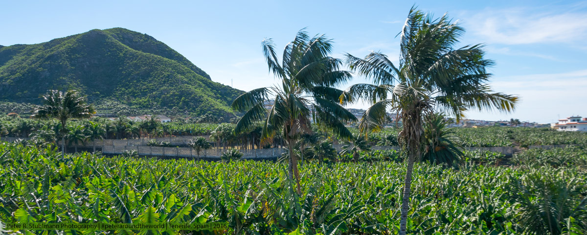 Jahresrückblick 2016: Bananenplantage im Norden Teneriffas.